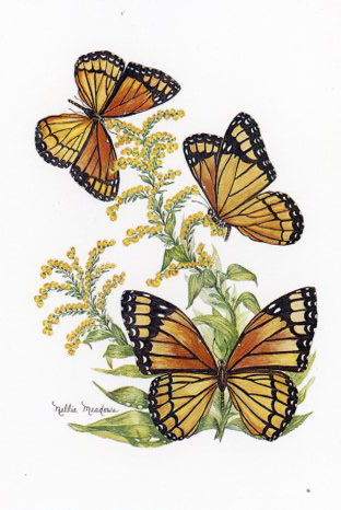 Viceroy Butterfly painted by Nellie Meadows of Clay City, KY