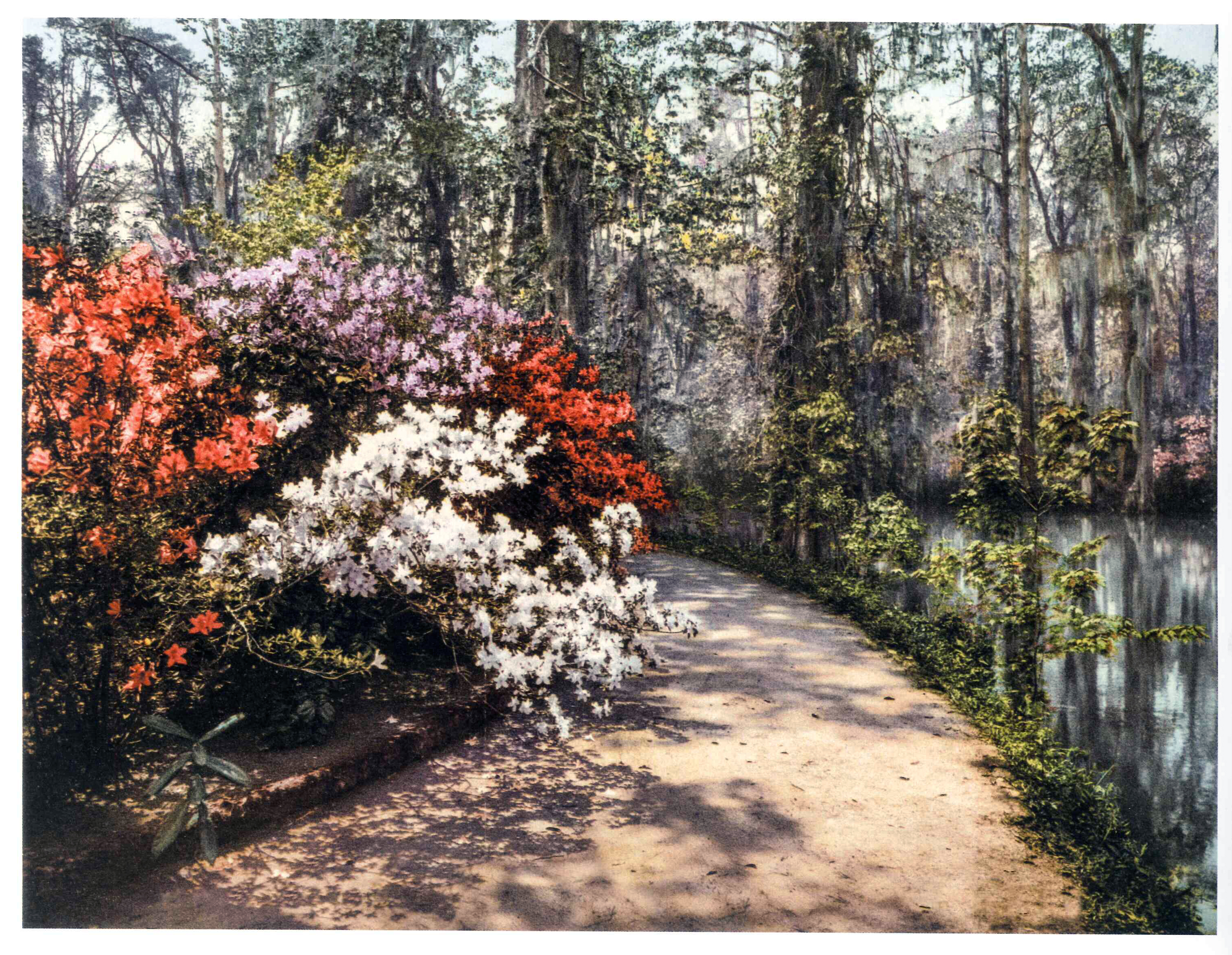 Gardens by the lake on the Magnolia Plantation, South Carolina (photochrom)